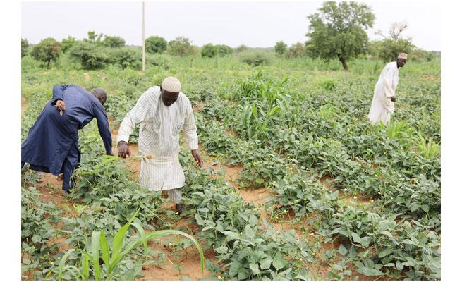 FISAN: Le Niger lance un Fonds d'investissement de 15 milliards FCFA, pour la sécurité alimentaire