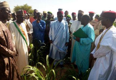 MARADI: la campagne agricole s'annonce prometteuse dans certaines localités